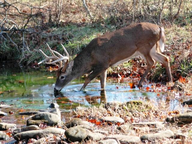 How To Find Deer